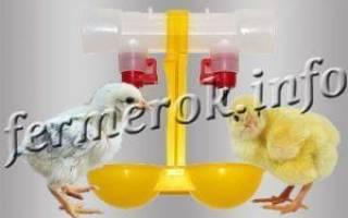 Профилактика болезней цыплят в домашних условиях — препараты и схемы пропойки