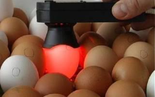 Как различить цыплят по полу — популярные методы и способы