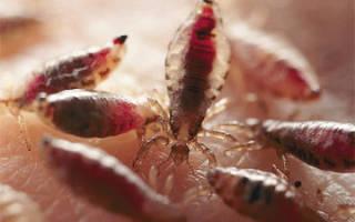 Как избавиться от паразитов у кур раз и навсегда?