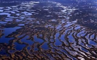 Самое большое болото в мире — васюганское болото, экологические проблемы, угрожающие данному региону, и возможные пути их решения