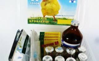 Какие лекарства для кур нужно обязательно иметь в ветаптечке?