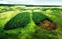 Вырубка лесов — экологическая проблема всего человечества