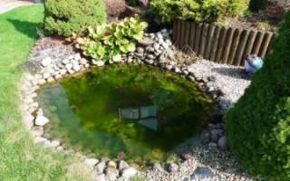 Какими способами модно произвести качественную очистку пруда от водорослей