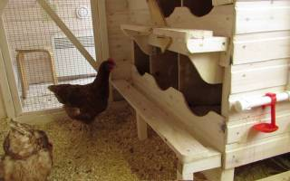 Как сделать гнезда для кур своими руками — в виде ящиков, с яйцесборником, навесные
