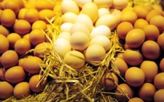 Почему куры клюют яйца — что делать, чтобы отучить птиц от «вредительства»?