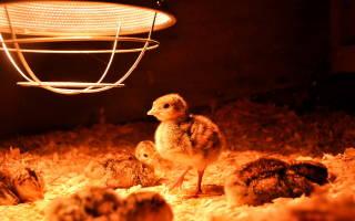 Как обогреть курятник зимой и сэкономить на электричестве?