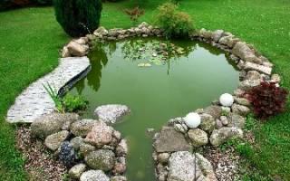 Биологическая очистка водоемов — как правильно ее провести