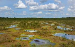 Значение болот для природы и человека, их польза и вред